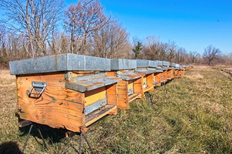 在黄色蜂蜂房的蜂在一好日子 蜂蜂房行在领域的 免版税库存照片