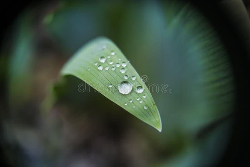 在黄花菜叶子的水下落 库存图片