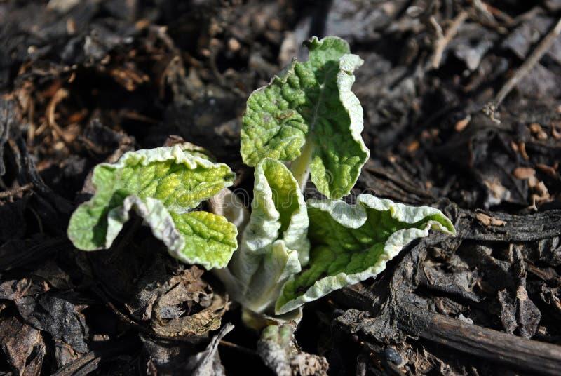 在黑地球背景,顶视图的植物名年轻新芽 免版税图库摄影