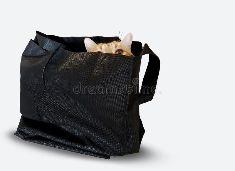 在黑大袋的虎斑猫在白色 库存照片