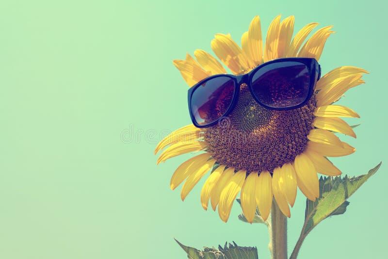 在黑太阳镜、向日葵和太阳镜的选择聚焦 库存照片