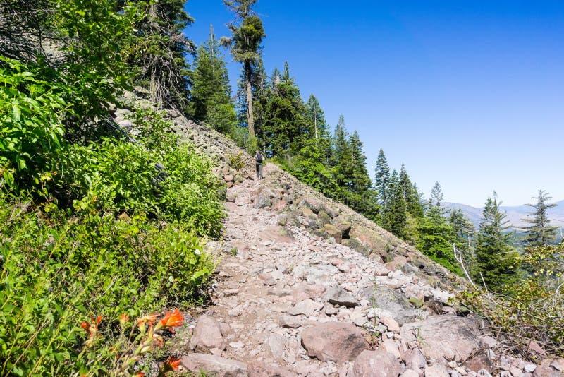 在黑小山上面的供徒步旅行的小道,接近沙斯塔山,锡斯基尤县,加利福尼亚北部 免版税库存照片