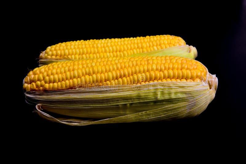 在黑屏幕上的黄色玉米 库存图片