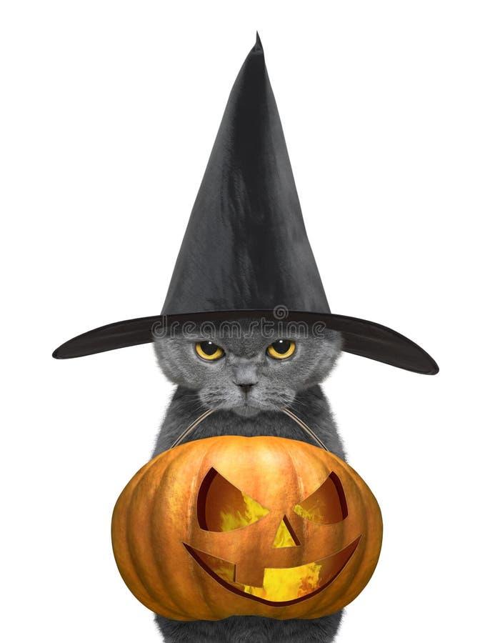 在黑帽会议举行万圣夜南瓜的逗人喜爱的猫在白色-隔绝的嘴 免版税图库摄影