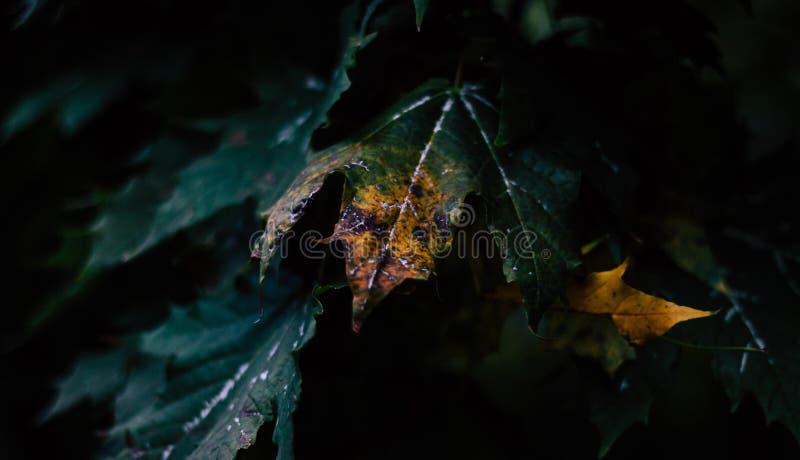 在黑暗的叶子 免版税图库摄影