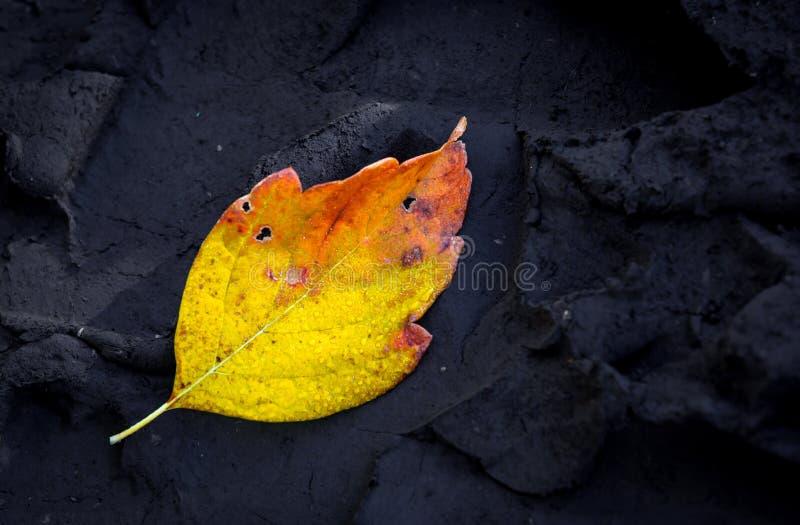 在黑暗的土壤的秋天叶子 图库摄影