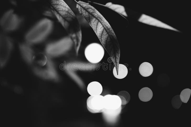 在黑暗的夜和光的叶子 库存图片