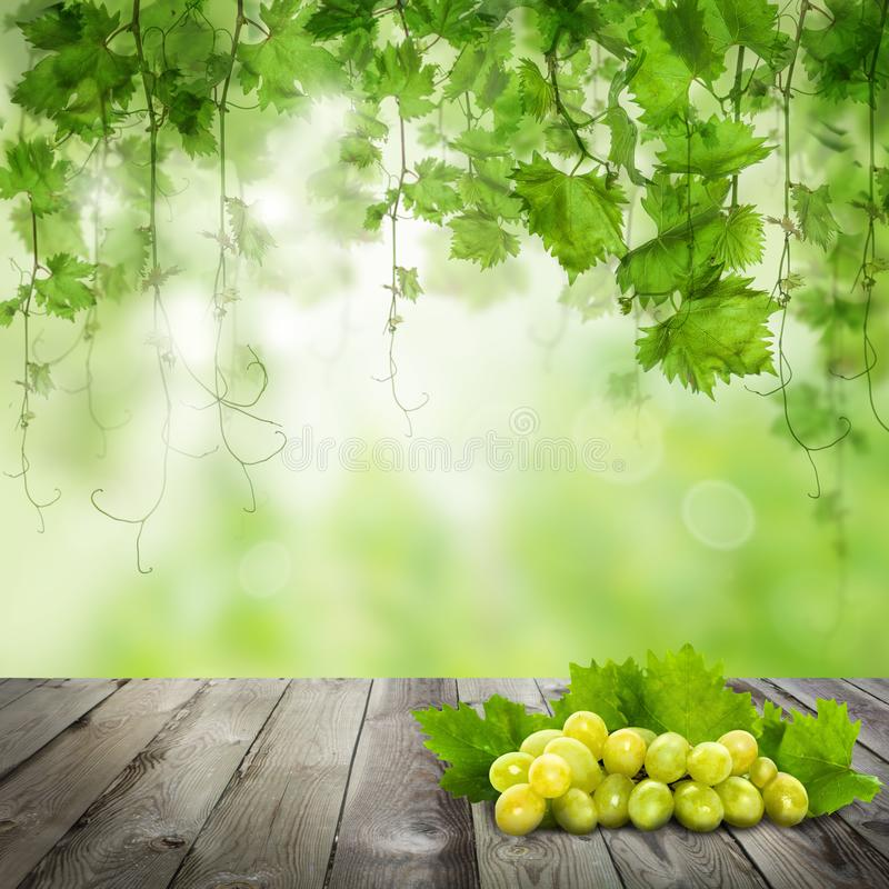 在黑暗的木桌上的葡萄 晴朗的绿色背景 库存例证