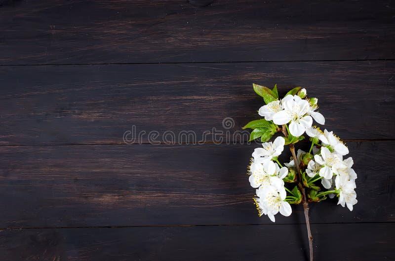 在黑暗的木背景的樱桃花 图库摄影