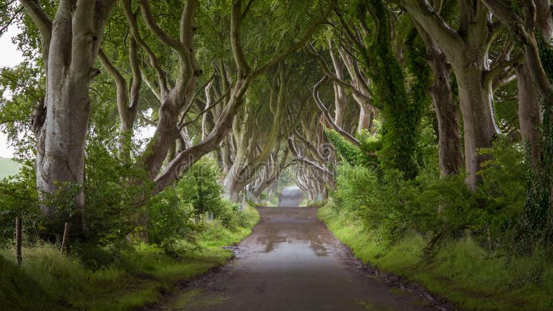 在黑暗的树篱的空的路在雨天 库存图片