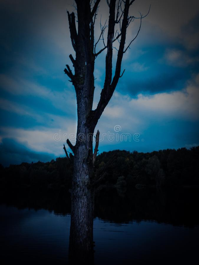 在黑暗的海前面的黑暗的树 库存图片