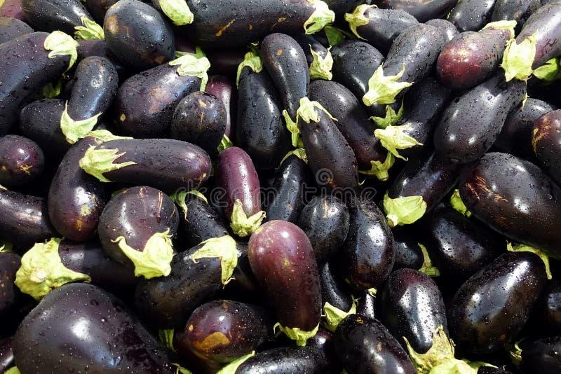在黑暗的紫色的茄子与雨的毛毛雨 库存照片