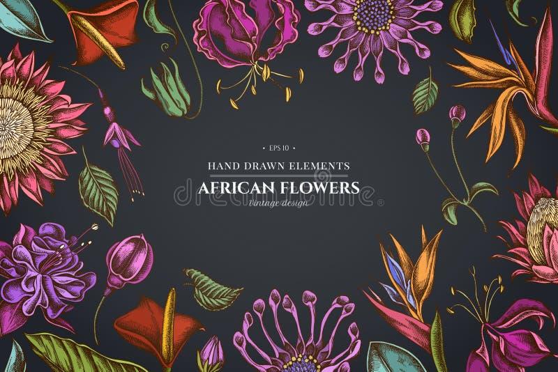 在黑暗的背景与非洲雏菊,倒挂金钟,gloriosa,国王普罗梯亚木,安祖花,鹤望兰的花卉设计 皇族释放例证