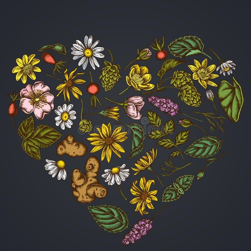 在黑暗的背景的心脏花卉设计与白屈菜,春黄菊,狗玫瑰,蛇麻草,洋姜,薄荷 向量例证