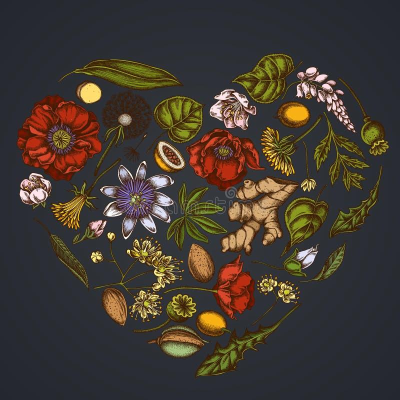 在黑暗的背景的心脏花卉设计用杏仁,蒲公英,姜,鸦片花,激情花,椴树属cordata 皇族释放例证