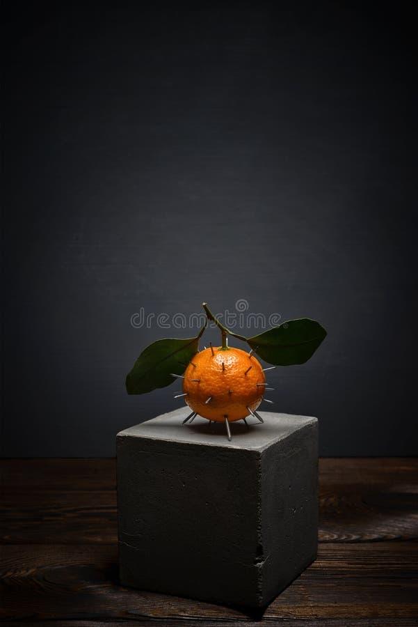 在黑暗的背景的新鲜水果在具体立场 与叶子的明亮的橙色蜜桔有锋利的刺的 库存图片