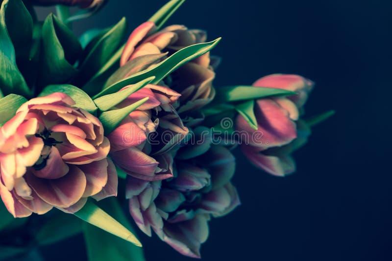 在黑暗的背景的新鲜的美丽的桃红色紫色郁金香花束 E r 免版税图库摄影