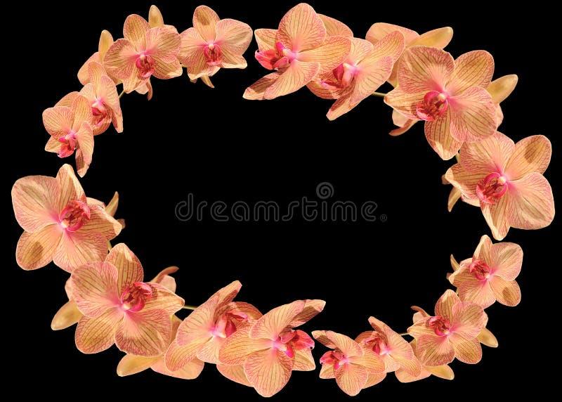 在黑暗的背景的桃红色兰花 免版税库存图片