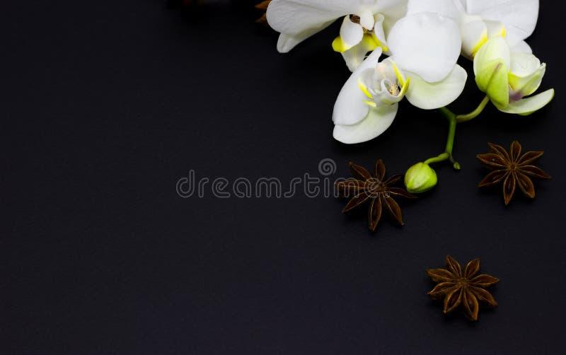 在黑暗的背景的白色兰花兰花植物,您的文本的地方 免版税图库摄影