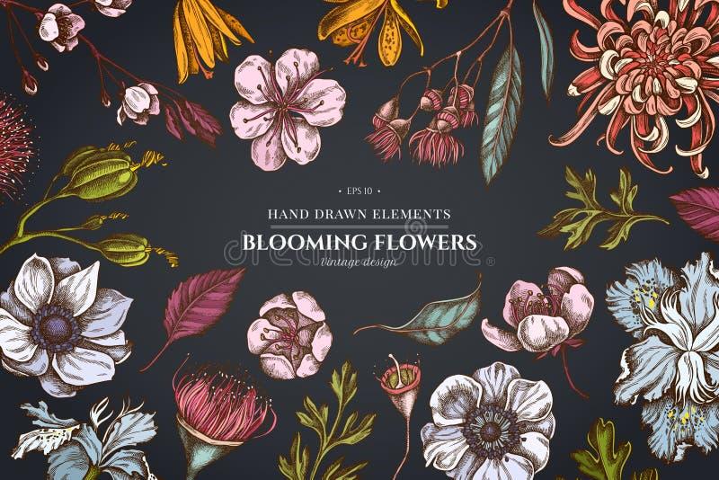 在黑暗的背景的花卉设计与日本菊花,黑莓百合,玉树花,银莲花属,虹膜japonica 皇族释放例证