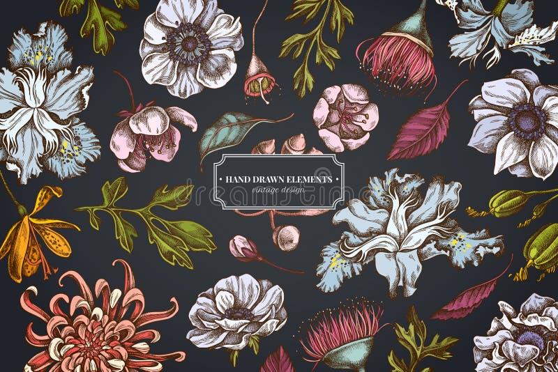 在黑暗的背景的花卉设计与日本菊花,黑莓百合,玉树花,银莲花属,虹膜japonica 库存例证