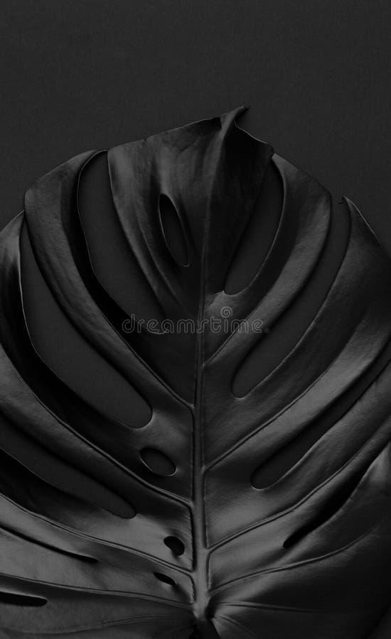 在黑暗的背景的黑发光的monstera叶子 库存图片