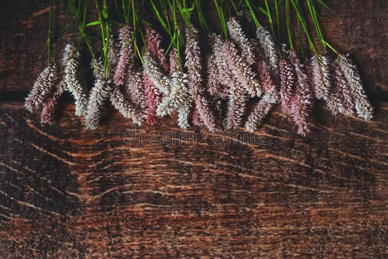 在黑暗的eco木背景的菲奥莱花 库存照片