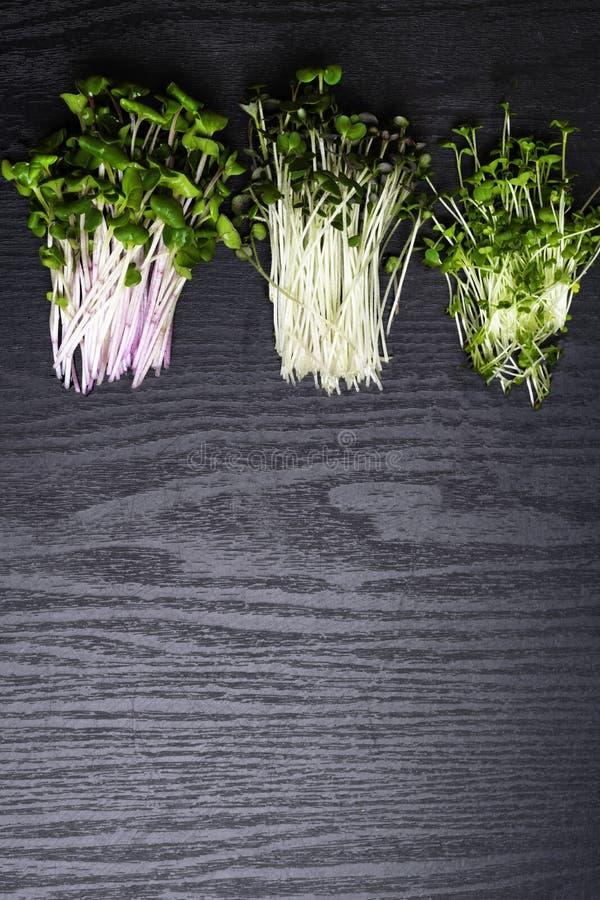 在黑木背景的混杂的华美的Microgreens 免版税图库摄影