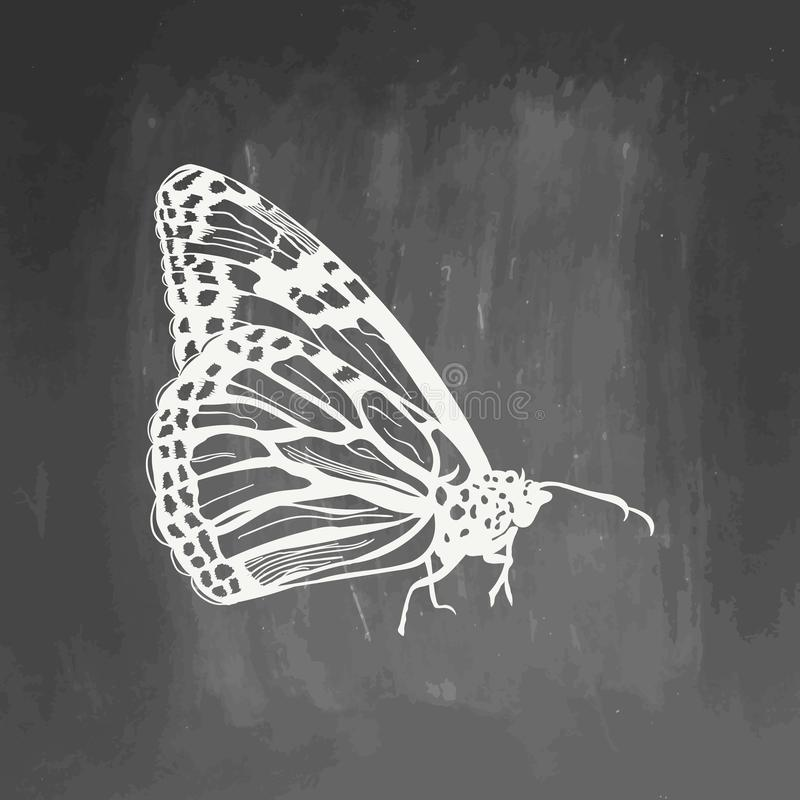 在黑板隔绝的手拉的蝴蝶剪影标志 在时髦样式的蝴蝶元素 免版税库存照片