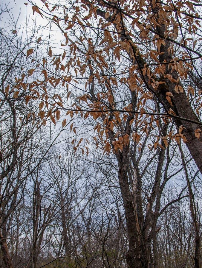 在黑核桃木底下Bethania,北卡罗来纳的供徒步旅行的小道 免版税库存照片