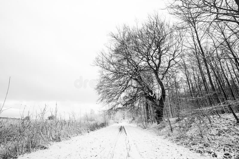在黑白的冬天风景与树 库存照片