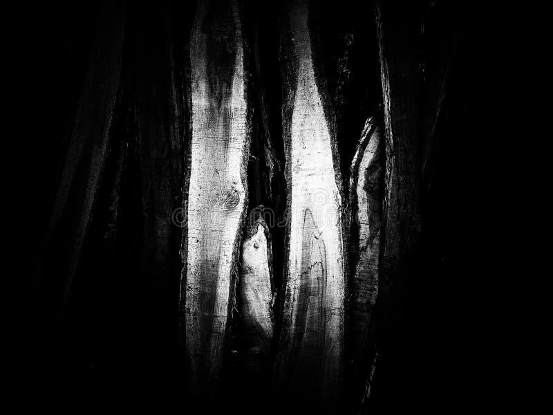 在黑白的木堆纹理 免版税库存图片