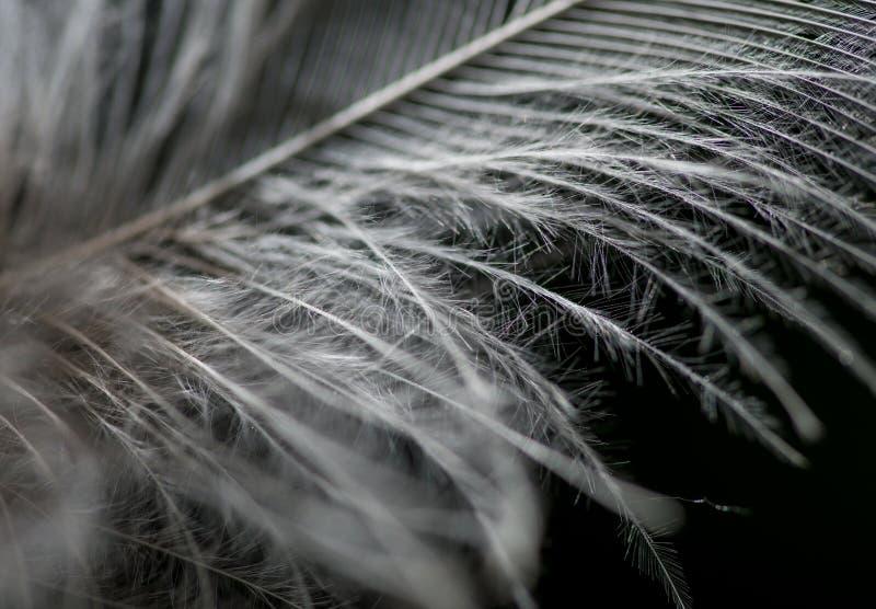 在黑白的羽毛 免版税库存照片