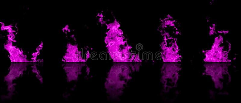 在黑背景与反射的隔绝的桃红色颜色真火火焰 在5火焰黑色的大模型  向量例证