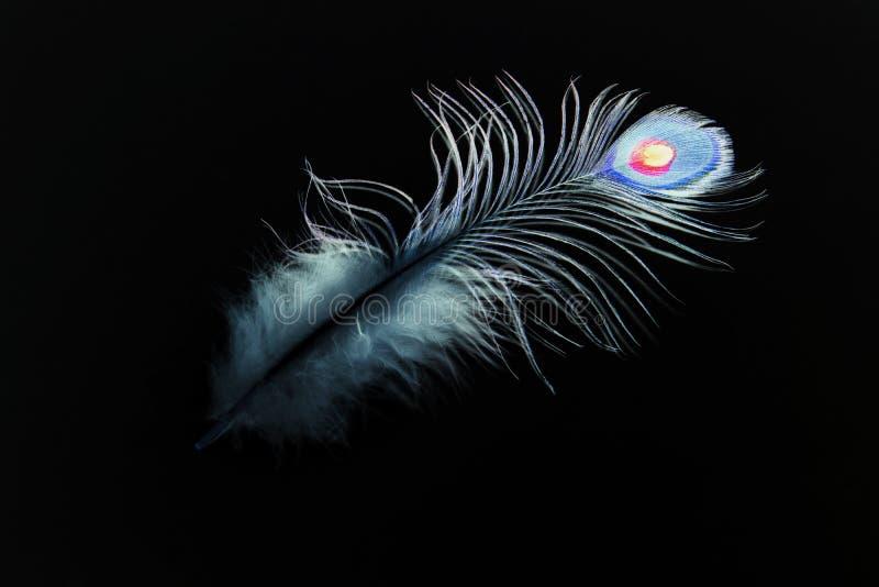 在黑背景的孔雀羽毛 抽象 免版税库存照片