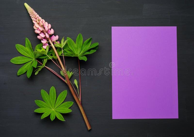 在黑背景的春天花与白纸 你好春天 库存照片