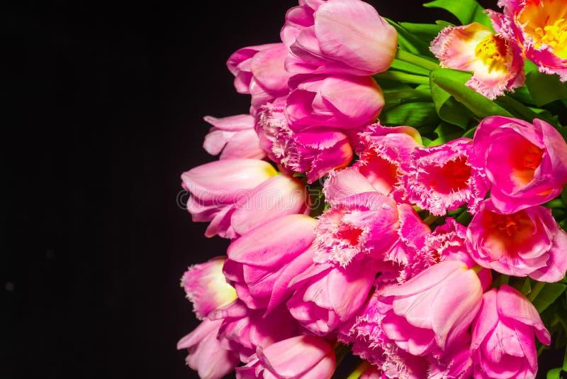 在黑背景的桃红色郁金香   华伦泰背景 桃红色郁金香花束在轻的背景的 免版税库存图片