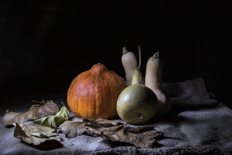 在黑背景的静物画 说谎在干燥叶子和麻袋布的多色的南瓜 库存照片