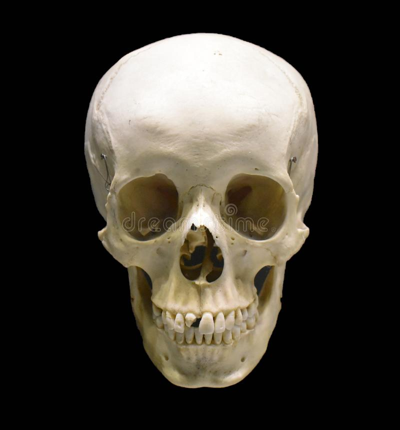 在黑背景隔绝的人的头骨 解剖上与蠕动的细节的正确人的头骨模型恐怖艺术品的或 免版税库存照片