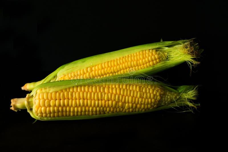 在黑背景隔绝的新鲜的黄色甜玉米棒子 对食物概念 库存图片