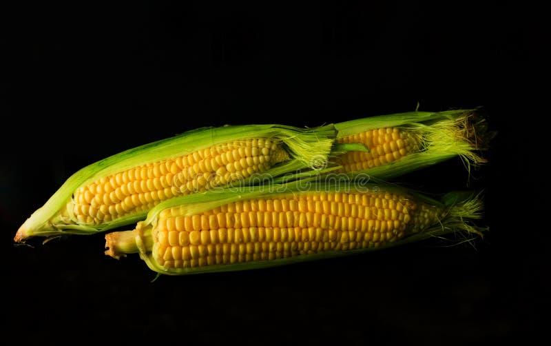 在黑背景隔绝的新鲜的黄色甜玉米棒子 对食物概念 免版税库存图片