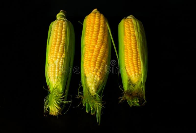 在黑背景隔绝的新鲜的黄色甜玉米棒子 对食物概念 免版税图库摄影