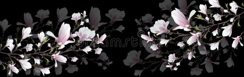 在黑背景隔绝的现实木兰花 木兰分支是春天,夏天,女性魅力,阴物的标志 皇族释放例证