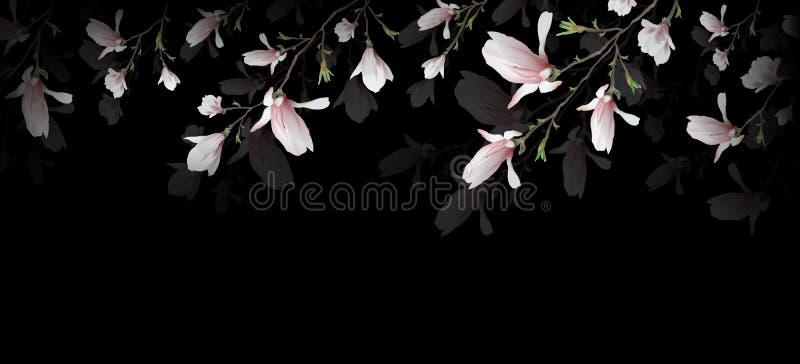 在黑背景隔绝的现实木兰花 木兰分支是春天,夏天,女性魅力,阴物的标志 库存例证