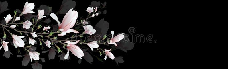 在黑背景隔绝的现实木兰花 木兰分支是春天,夏天,阴物的标志 3d?? 库存例证
