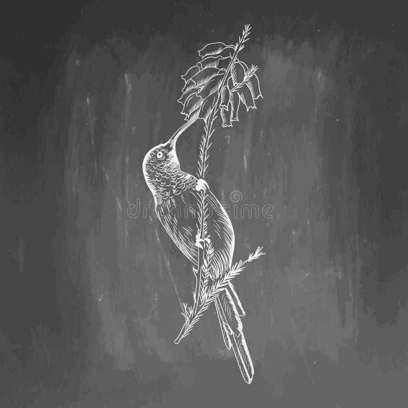 ?? 在黑背景隔绝的白色鸟剪影 画贺卡的colibri,邀请,印刷品 免版税库存图片
