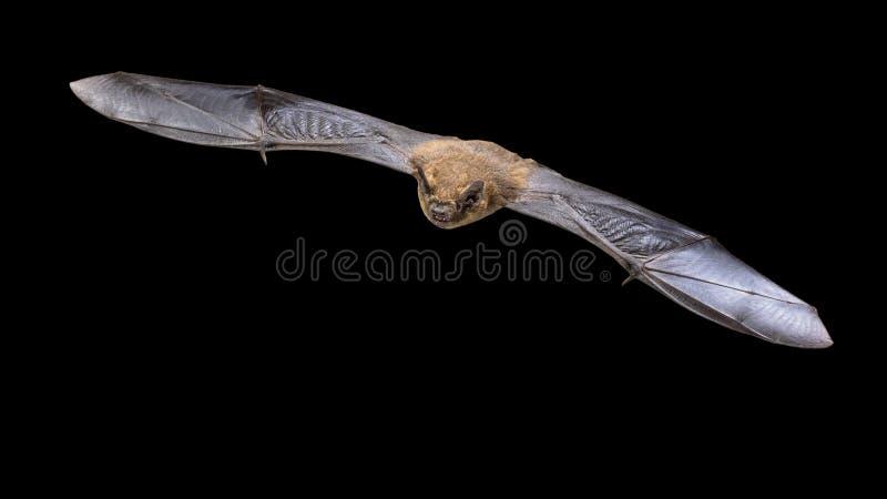 在黑背景隔绝的飞行的动力滑翔机试飞棒 库存图片