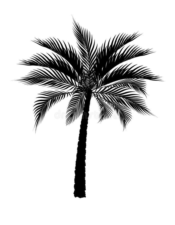 在黑色的一棵热带棕榈树 背景查出的白色 例证 皇族释放例证