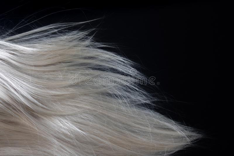 在黑色的白肤金发的发光的头发 免版税库存图片