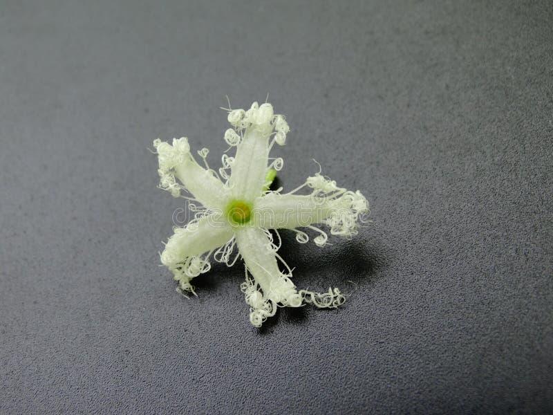 在黑色隔绝的庄严白花,特写镜头图象 免版税图库摄影
